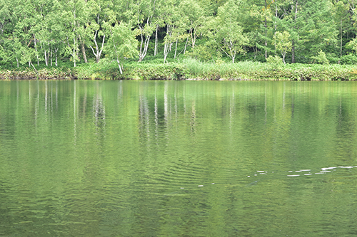 でっかい鯉が泳ぐ池