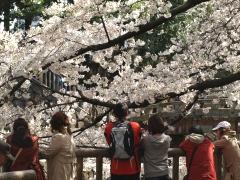 思い思いに桜を愛でる